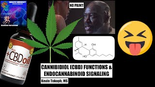 [Re-upload] How Does CBD Oil Work? | Mechanisms of THC and CBD in Pain