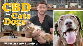 CBD Oil for Dogs, Cats, Pets – What are the Benefits? Treating Anxiety, Pain, Inflammation, Seizures