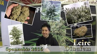 Dinafem presents Haze Auto CBD and Industrial Plant Auto CBD at Spannabis 2016 ENG_BG_ES SUB