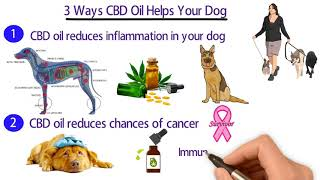 3 Ways CBD Oil Helps Your Dog