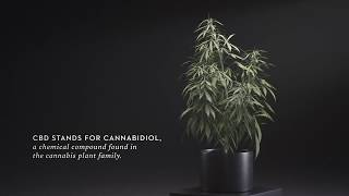 Malouf CBD Oil Infused Pillows