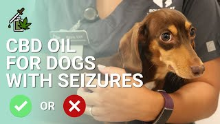 CBD Oil for Dogs with Seizures | Recommended?